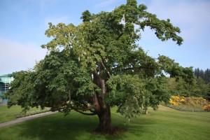 Tree IMG_1561